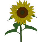 Sunflower vector graphics