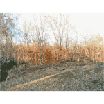 Missouri Nature 2 2015011228