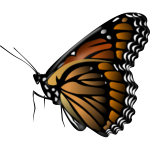 Monarch butterfly vector clip art