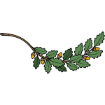 Oak branch vector image
