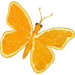 Citrus butterfly
