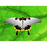 Vector clip art of grey butterfly on a leaf