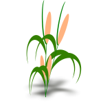 Vector illustration of plant with cobs