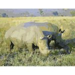 Rhinoceros in South Africa adjusted 2016121800