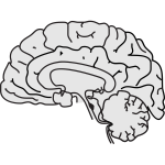 Vector image of grey human brain with thin black line