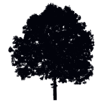 Single Tree Silhouette