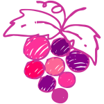 Sketched grapes image