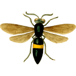 Image of a fly