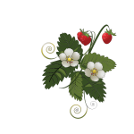 Strawberry plant vector image