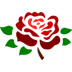 Blossomed deep red rose
