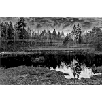 Swamp 3 Grayscale