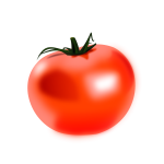 Vector drawing of shiny tomato