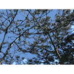 Trees and blue sky 2016021658