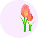 Vector image of a tulips