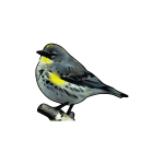Warbler vector trace