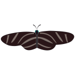 Vector drawing of zebra butterfly