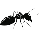 ant animal pdv