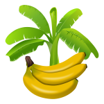 Colourful banana plant with fruits below graphics