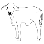 Male calf line art vector image