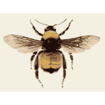 Retro bee image