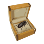 Beetle in a box vector image