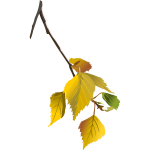 Tree branch in autumn vector drawing