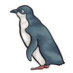 Penguin vector drawing