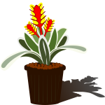 Potted Bromelia vector image