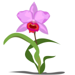 Single Cattleya flower vector graphics