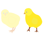Vector image of two chicks in different shades of yellow