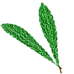 Textured green leaves