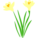 dafodils for gravesite