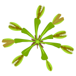 Vector graphics of carnivorous plant view from top