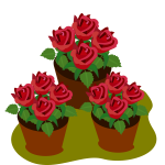 Pots with roses