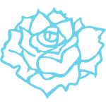 Vector illustration of full bloom rose in blue outline