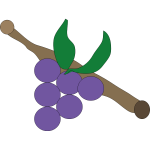Purple grapes vector drawing