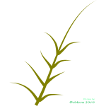 Vector graphics of green plant growing to the side
