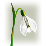 Snowdrop with three petals vector clip art