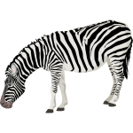 Vector image of photorealistic zebra