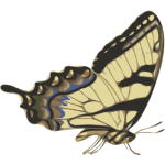 Side view of brown butterfly vector image