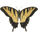 Vector image of tiger pattern butterfly