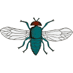 Vector illustration of bluebottle fly