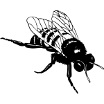 Vector clip art of bumble bee