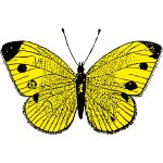 Vector image of black and yellow butterfly