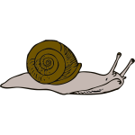 Vector illustration of snail