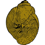 Vector image of snail shell
