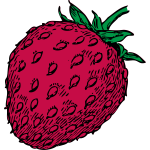 Vector drawing of red strawberry fruit