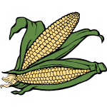 Two ears of corn vector illustration