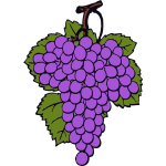Vector drawing of ripe grapes