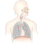 Symbol for lung cancer vector image